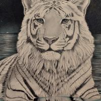 'White Tiger of the Western Skies' Tiger graphite drawing, wildlife art.