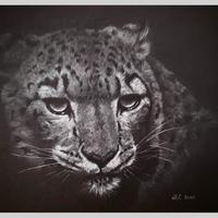 Snow Leopard - Competition submission