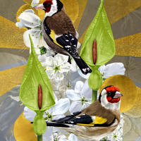 Goldfinches in May