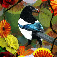 Magpie With Red Berry