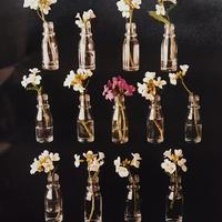 Photograph : Flowers in Bottles