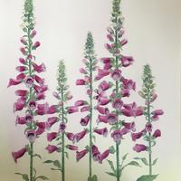 "Foxgloves - acrylic - 20"" x 24""  £250"