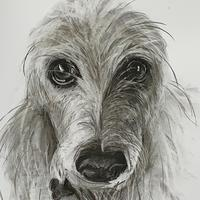 Bumble the Lurcher - Charcoal on paper