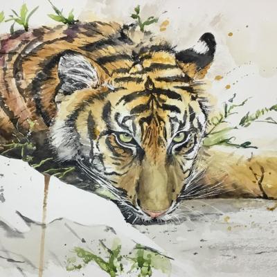 Tiger waiting. Watercolour