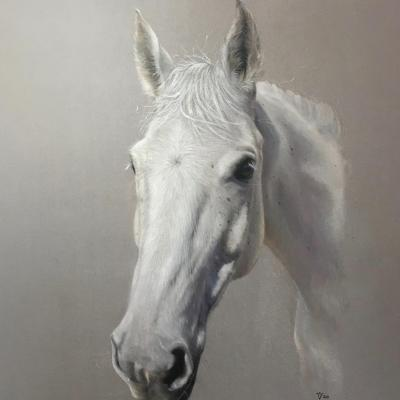 Austin; Portrait of a grey horse in coloured pencil. A3 size Pastelmat.