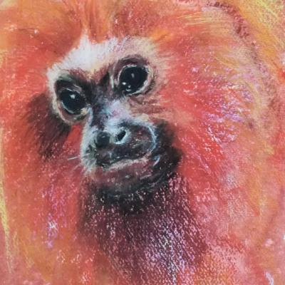 Golden Lion Tamarin; mixed media drawing