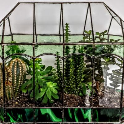 Indoor gardening with handmade terrariums. Home grown cacti and succulents.
