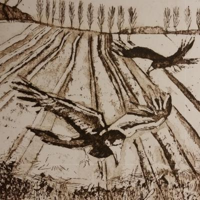 Detail from 'Crows' - copperplate etching.