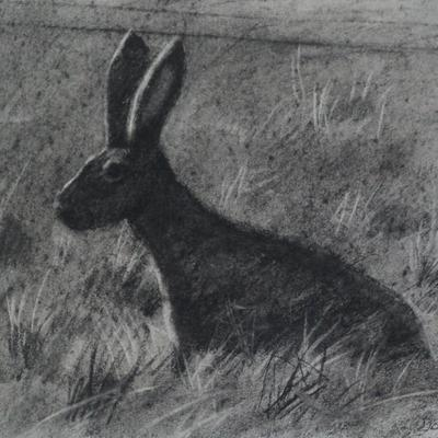 Charcoal drawing of hare, from a sketch from life
