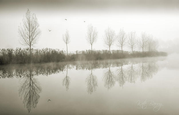 A line of trees at the waters edge on the River Avon at Pershore reflected in the still waters on a frosty, foggy morning.