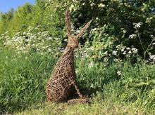 Willow Hare