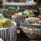 Growing together, Lin Hutton high fired earthenware and sempervivums.
